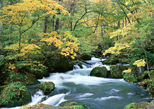 River water forest Stock Image