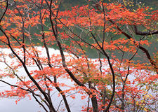 River water forest Royalty Free Stock Photography