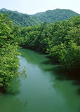 River water forest Stock Photos