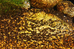 River water refraction. Rock in a river water refraction Royalty Free Stock Images