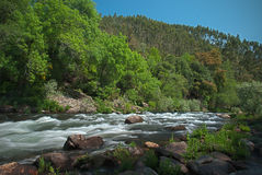 River water stream Royalty Free Stock Photo