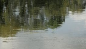River water surface. Close up stock video footage