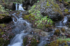 River waterfall in Carpathians mountains forest. Mountain waterfall and river in wild Carpathian mountains forest, Bucegi Natural Park Stock Photography