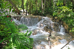River Waterfall in Tropical Forest Stock Photos