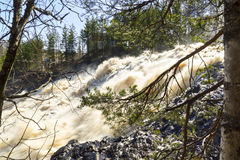 River waterfall in wild forest. Sunny waterfall in pine forest. Waterfall on Suna river named Hirvas means Elk in Karelian language. The mountain name is Hirvas Royalty Free Stock Image