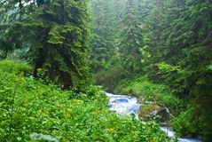 River in a wet forest Royalty Free Stock Photography