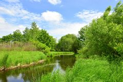 The river, which hid in the green of summer. A small river flows in a quiet place of the forest. Summer, warmth, bright colors everywhere. I want to arrange a stock photos