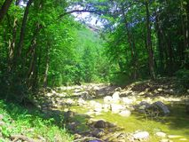 River with white stones deep in the forest, daytime, summer, Russia Stock Image