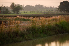 River and wild flowers. Paddy field , house, river, sunrise, skies and clouds at the countryside stock photos