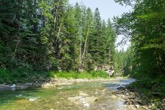 River in wild forest, nature background. Beautiful countryside.  royalty free stock photography