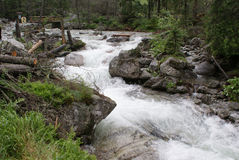 Wild River In The Woods Stock Photos