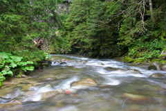 River. Wild river in the Polish mountains stock image