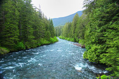 River in the wilderness Stock Photography