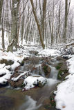 River in winter forest Royalty Free Stock Photos