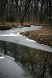 A river in a winter forest. A partially frozen river in a winter forest with barren trees reflecting in the water Royalty Free Stock Photo