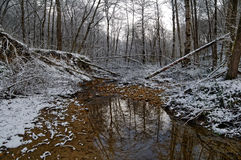 River in the winter forest. The small forest river in the wild winter forest Royalty Free Stock Photography