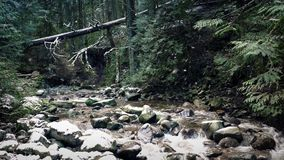 River In Winter Forest With Snow stock footage