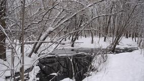 River in the winter forest, spring flow from the melting snow, trees covered with snow. stock video footage