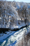 River in winter forest Stock Photography