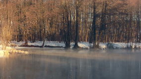 River in winter forest. Winter river. Misty river in winter forest. Forest trees stock footage