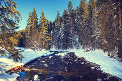 River in the winter mountain forest. Royalty Free Stock Photo