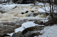 River and whitewater at winter. River rapid whitwater winter water snow rocks Royalty Free Stock Image