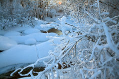 River in winter view. Snow-covered branches above an icy river. In the water, a reflection of trees can be seen Royalty Free Stock Images