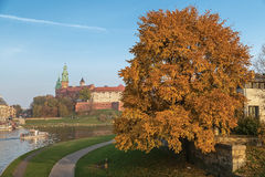 River Wisla Wawel Hill and a motley tree royalty free stock images