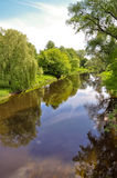The river in the wood. The beautiful river in the wood Royalty Free Stock Image