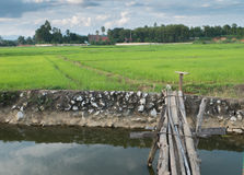 River wood bridge and green fields Stock Photography
