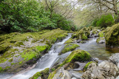River in wood. Motion blur river in a wood, framed by moss and lichen covered rocks Stock Photo