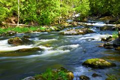 River through woods Royalty Free Stock Image