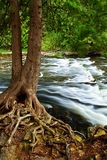 River through woods Stock Image