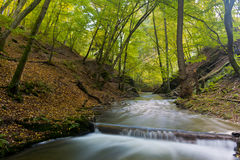 River in the Woods. A River in the forest with green sky royalty free stock photography