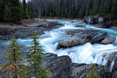 River in woods. Oho national park, BC, canada stock images