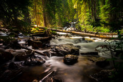 River With Woods and Rocks in the Forest during Daytime Stock Photo