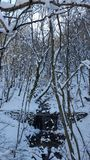 River in the woods. A small stream partly frozen in the forest Royalty Free Stock Photos