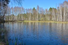 River in the woods in  spring. Stock Photography