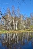 River in the woods in  spring. Stock Photo
