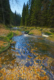 River with yellow autumn foliage Royalty Free Stock Photo