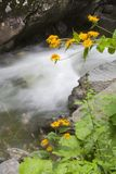 River and yellow flowers Royalty Free Stock Images