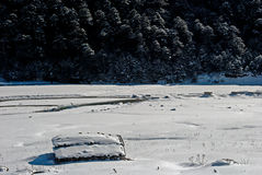 River at Yumthang Valley. A tributary of the river Teesta flows past the snow filled Yumthang valley, Sikkim, India in the winter and local people closed their Royalty Free Stock Images