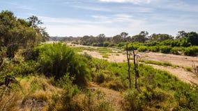 Riverbad del río de Olifants, parque nacional de Kruger, Suráfrica Imagen de archivo libre de regalías