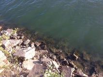 Riverbank fotografia royalty free