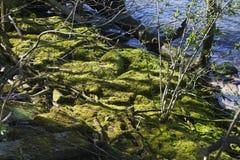 riverbank fotos de archivo