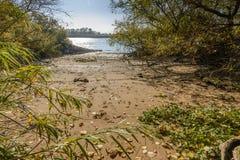 riverbank Lizenzfreie Stockfotos