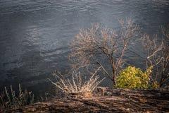 riverbank стоковые изображения rf