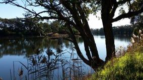 Riverbank Australia royalty free stock images