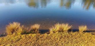 Riverbank con las cañas y la línea de la playa herbosa imagen de archivo libre de regalías