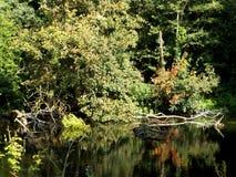 Riverbank con los árboles y la reflexión del agua fotografía de archivo libre de regalías